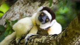 Madagaskar - w krainie lemurów